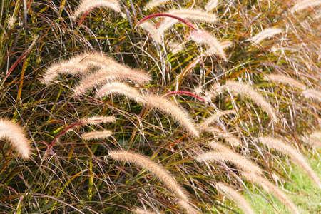 limp: Grass Plumes