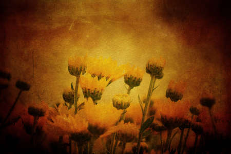 flowers in grunge parchment style  photo