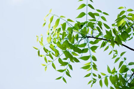 green leaf isolated on sky background Stock Photo - 13116614