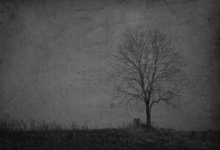 nightfall: Tree on the hill   Stock Photo