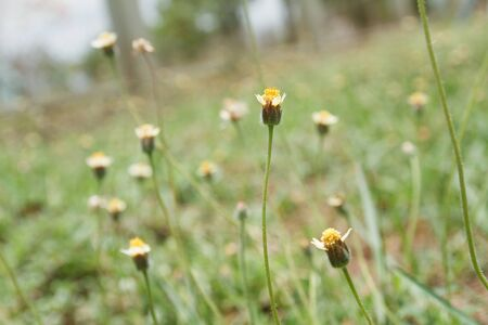 The flower of grass  photo
