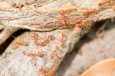 Red ants on the grass  photo