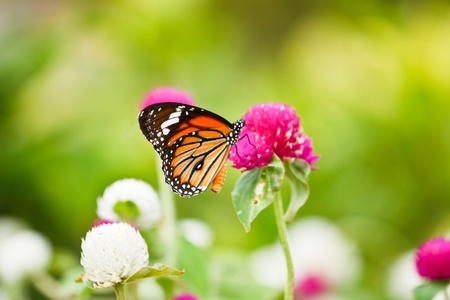 Butterfly on a flower. photo
