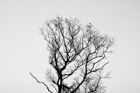 Tree of death. photo