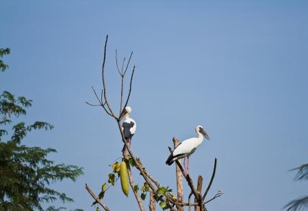 The open bill ibis Stock Photo - 17234948