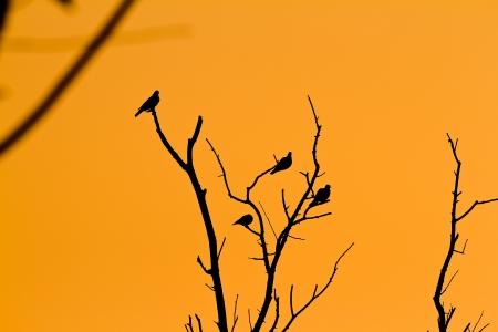 Bird on the tree of the evening. photo
