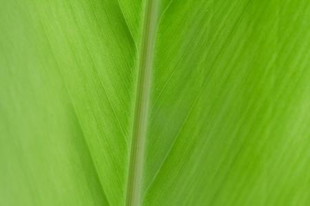 Patterned green banana leaves  Stock Photo