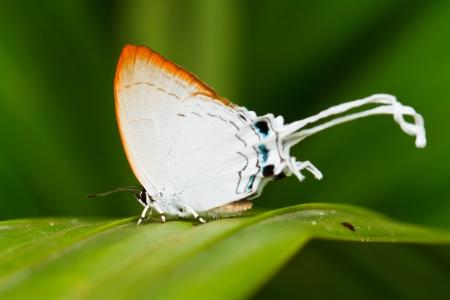 Butterfly in pang sida national park  thailand Stock Photo - 22796476