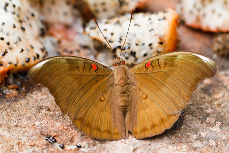 Butterfly in pang sida national park  thailand photo