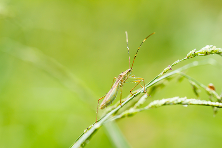 insect on green grass Stock Photo - 24598410