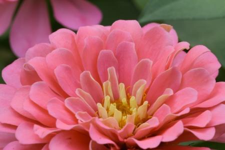 impatiens: Flor impatiens rojos Foto de archivo