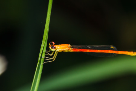 sprawled: dragonfly branches stay in grass