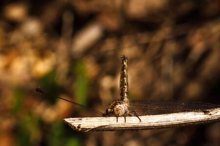 Dragonfly photo