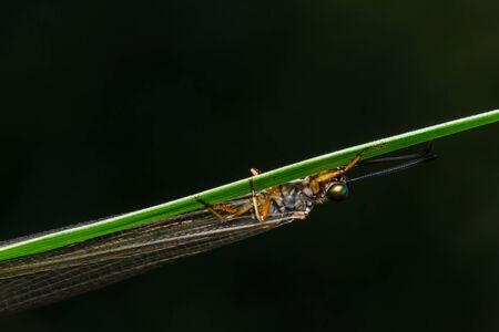 dragonfly on leaf photo