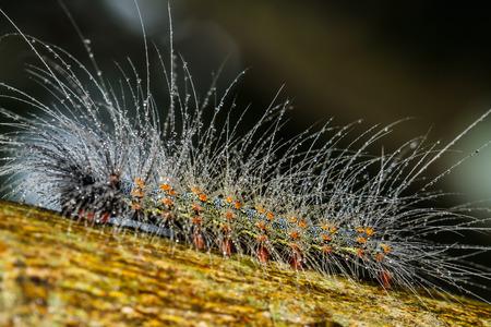 hairy caterpillars Stock fotó - 30363000