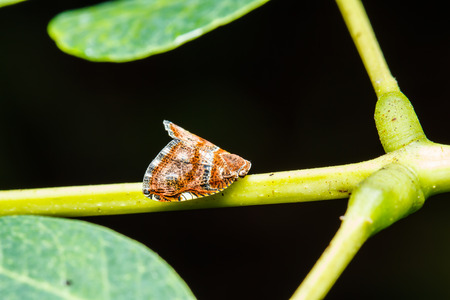 low scale magnification: In sect on green leaf