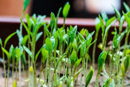 regenerate: Seeds that just regenerate