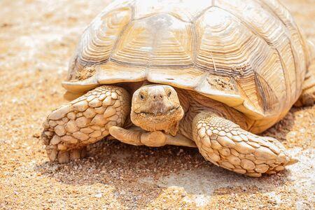 lasting: turtle close up
