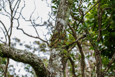 absorb: parasite plant living on trees
