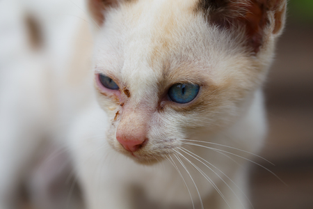 unattended: White stray kitten unattended.