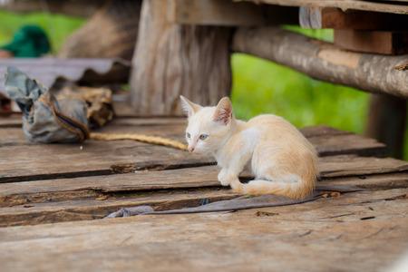 stray: White stray kitten unattended.