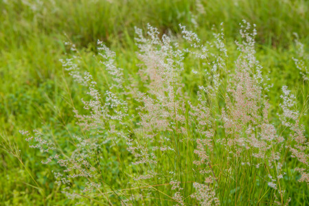 swaying: Grass swaying in the wind. Stock Photo
