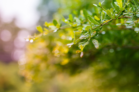 water drops after rain