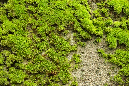 Old concrete Brick Wall with Moss