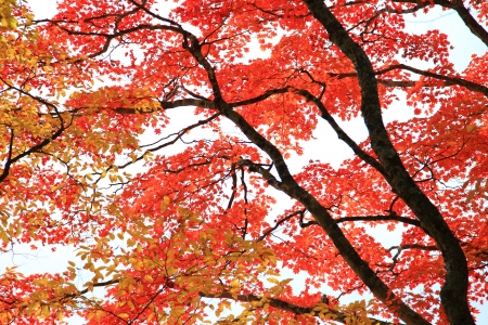 Nikko and the area around Lake, in particular, are well known for their beautiful autumn colors Stock Photo - 16493649