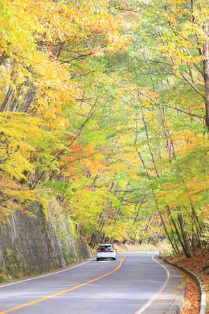Nikko and the area around Lake, in particular, are well known for their beautiful autumn colors Stock Photo - 16493646