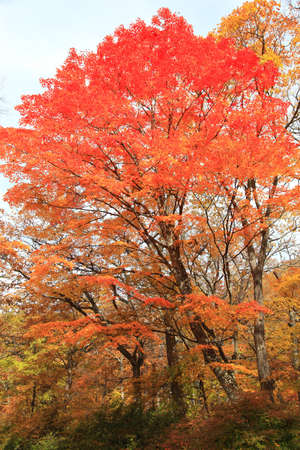 Nikko and the area around Lake, in particular, are well known for their beautiful autumn colors Stock Photo
