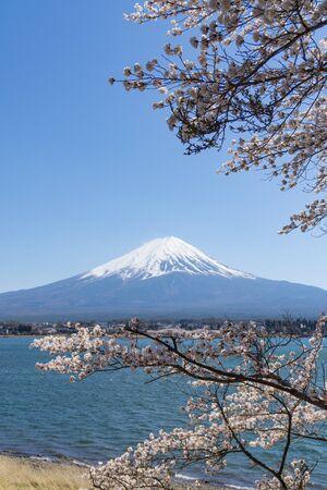 Fuji mountain with snow cover on the top with cherry blossom (sakura). Locate near lake Kawaguchiko, Japan