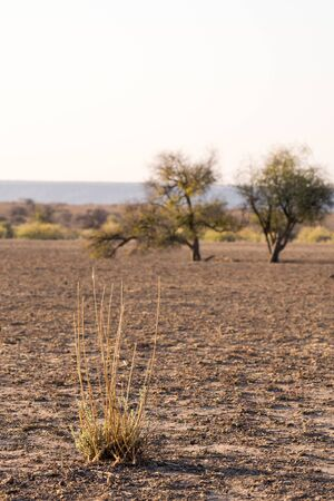 Drought land where usually a lake takes place, dry season in Namibia, Africa