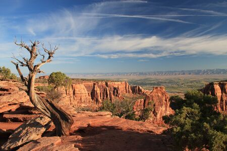 View in the canyon of the colorado national monument. Dead tree but blue sky