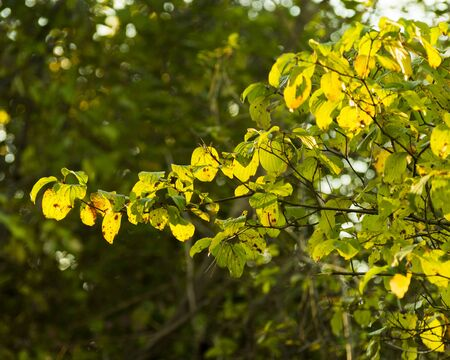 Autumn tree and leaves