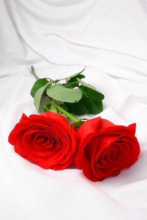 tissu blanc: Deux roses sur le tissu blanc soyeux Banque d'images