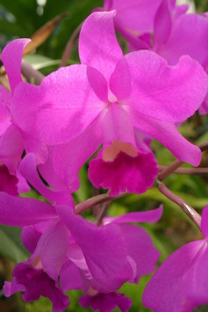 shimmery: Shimmery Orchid Stock Photo