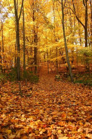 natures: Natures Golden Beauty