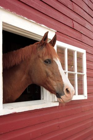 horse pokes his head out a window of the barn