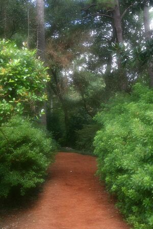 Inviting dreamy garden path leads back into the unknown Imagens