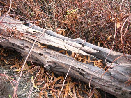 A log by a lake with dead weeds around it. photo