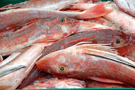Gurnard Stock Photo