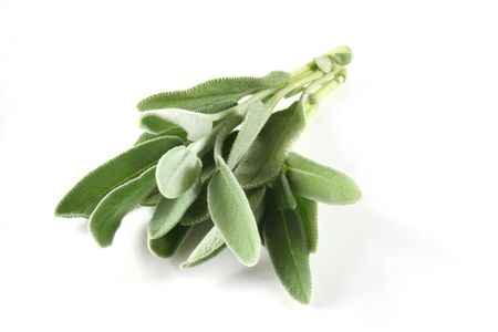 Sage on a white background