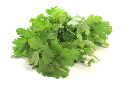 coriandrum sativum: un manojo de cilantro sobre un fondo blanco