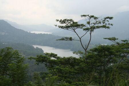 Ashtray baum im Hochland von Ceylon Standard-Bild - 9540535