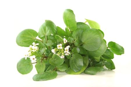 aphrodisiac: a sprig of fresh watercress on white background