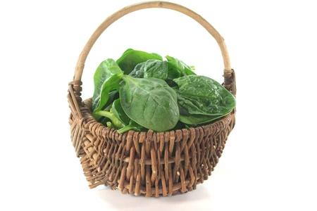 spinaci: foglie di spinaci freschi di verdi in un cesto su sfondo bianco