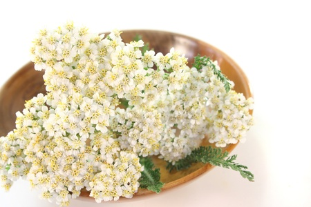 Yarrow in a wooden bowl on white background photo