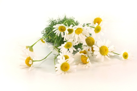 chamomilla: a bouquet of fresh chamomile flowers on a white background Stock Photo