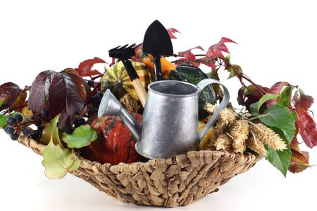 Thanksgiving basket with pumpkin and vines, garden tools and ears of wheat Stock Photo - 11058196